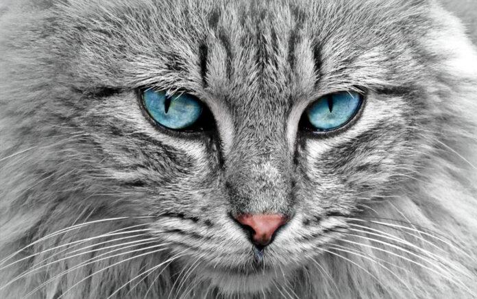 Katzenfilter